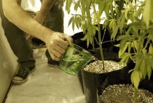 Legalização da maconha | Uruguai