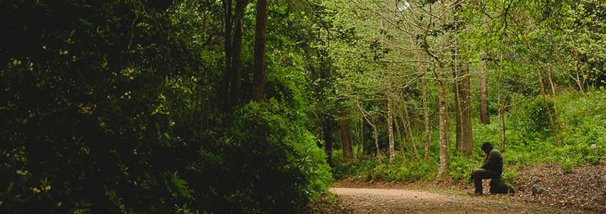 Arboretum Lussich - Punta Del Este Uruguai