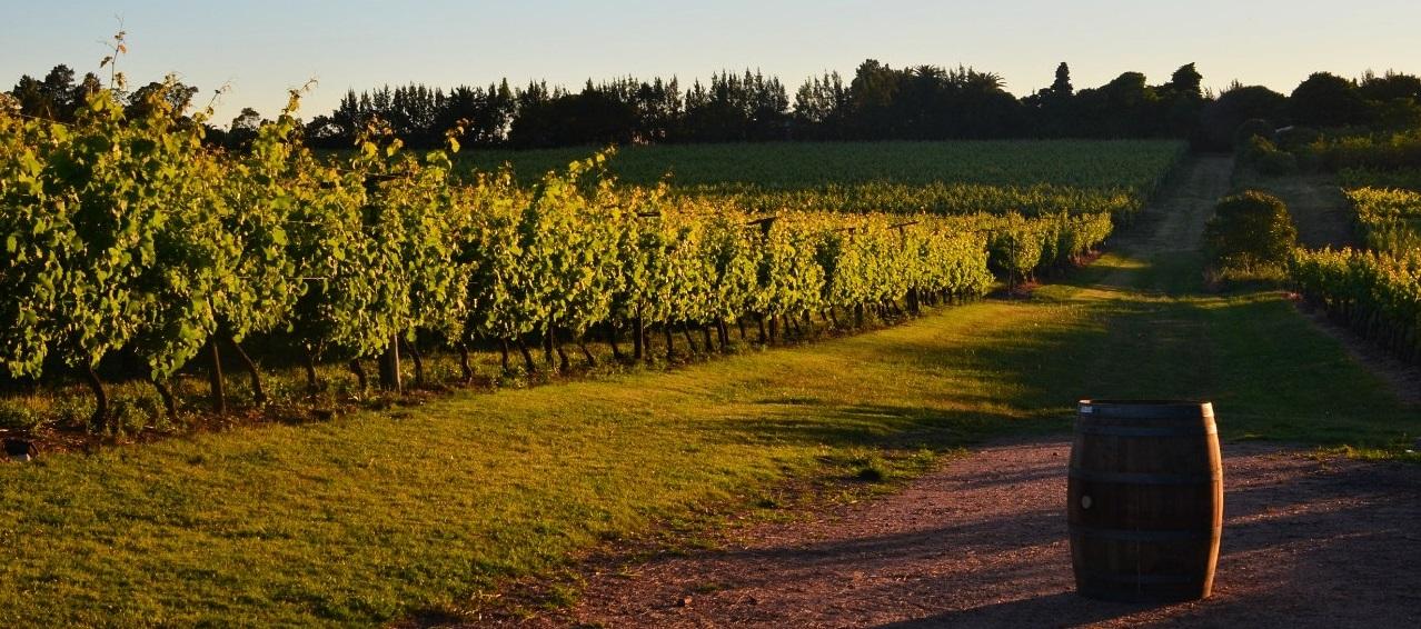 Instatannat vinho uruguaio 7
